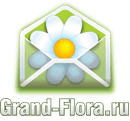 grand-flora